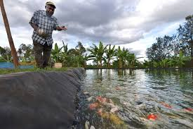 native plants of africa how aquaculture is threatening the native fish species of africa