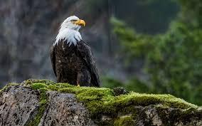 nature eagle bird 6923044