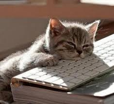 Sleepy Cat Meme - tired cat meme generator imgflip