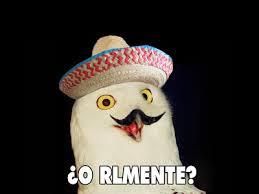 Meme Orly - origin of the orly owl meme