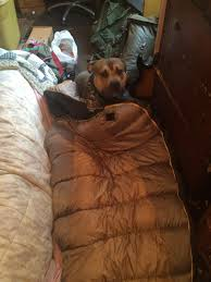 Cabelas Dog Bed Cabelas Striker 30 Degrees Sleeping Bag Squat The Planet