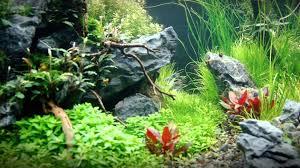 Aquascape Freshwater Aquarium Sticks U0027n Stones Freshwater Aquascape Part Iii Youtube