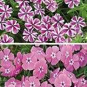 High Heat Plants 25 High Heat Flowers For Summer Areas No Wilting Lilies Here