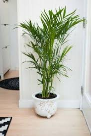 Challenge Plant Pot Indoor Plants Pots Http Www Homedesignideasx Placed In