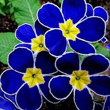 most beautiful flowers in the world garden pinterest