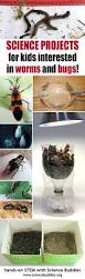 342 best on the science buddies blog images on pinterest science