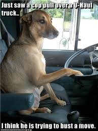 Dog Driving Meme - ba dum tiss i has a hotdog dog pictures funny pictures of dogs