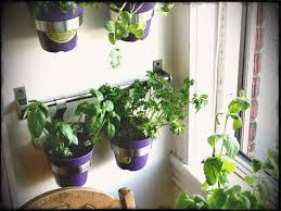 indoors garden guest project make a kitchen garden wall home gardens