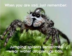 Image 325848 Misunderstood Spider Know - when you are sad just remember jumping spiders sometimes wear