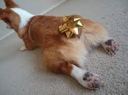 christmas sweaters corgi socks cookie joy and santa paws the