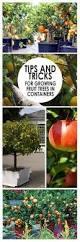 Indoor Vegetable Container Gardening - 15 veggies perfect for container gardening container gardening