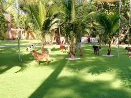 outdoor carpet brandon florida indoor putting greens backyard
