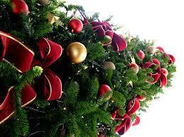 christmas tree fell over florida coastal cooking u0026 wellness