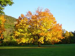 my free wallpapers nature wallpaper autumn tree