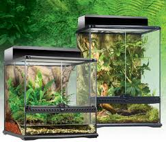caresheet gargoyle queen reptiles
