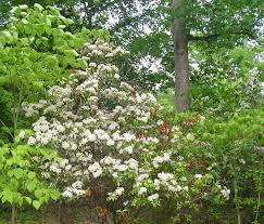 deer resistant native plants deer resistant plants which grow well in our neighborhood revised