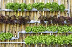 fascinating urban gardening ideas about home design ideas with