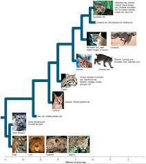 Cat Trees For Big Cats How To Draw Big Cats Lions Tigers Cheetahs And Much More
