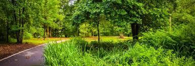 tree care company tree removal acworth ga