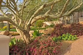 desert garden design implausible landscaping phoenix and phoenix
