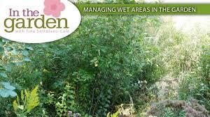 in the garden managing wet areas in the garden gardening