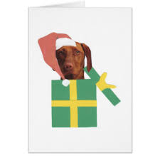 vizsla christmas cards zazzle