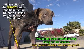 Living With A Blind Dog A Homeless Dog Living On The Streets Gets Rescued Transformed And