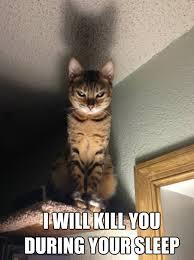 Evil Cat Meme - evil cat evil cat memes quickmeme fur babies pinterest