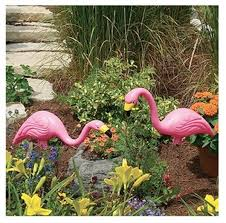 bloem t6197 stately pink flamingos lawn ornaments 2 pack