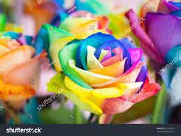 multi colored roses bouquet multicolored roses rainbow stock photo 121049014