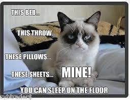 Grumpy Cat Sleep Meme - grumpy cat magnet zeppy io