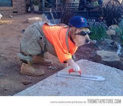 Halloween Costume Construction Worker Dog Halloween Costumes 2013 U2013 Bull Elephant