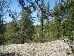Russian Boreal Forest Disturbance Maps by Summer Dispatches From The Field