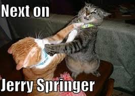 Jerry Springer Memes - jerry springer cat macros