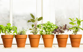 Indoor Herb Garden Kit Australia - 10 herbs to grow inside year round rodale u0027s organic life