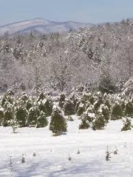 boys home christmas tree farm virginia is for lovers