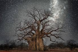 beth moon photographs the s oldest trees illuminated by