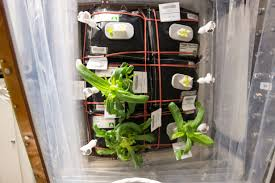 When Should I Start Planting My Vegetable Garden by Testing Hardware For Growing Plants And Vegetables In Space Nasa