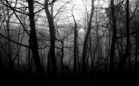 wallpaper tumblr forest black and white tumblr wallpaper black and white forest wallpaper
