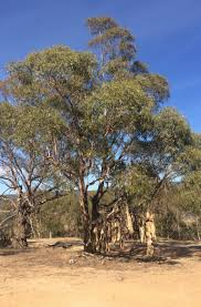 the tree of omeo sounds like noise