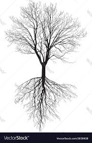 bare tree with roots royalty free vector image