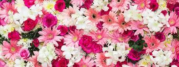 Beautiful Flowers Image Flowers By Karen Florist In Kilmarnock 01563 522233