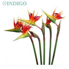 flowers free shipping aliexpress buy indigo 5pcs orange bird of paradise big pu real