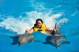 how can i become a dolphin trainer for a day at dolphinaris