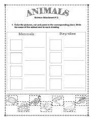vertebrate worksheets free worksheets library download and print