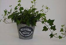Shabby Chic Planters by French Planter Ebay
