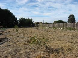 planting natives weeds downonthegarm