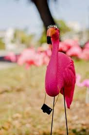 130 best flamingos images on pink flamingos flamingo