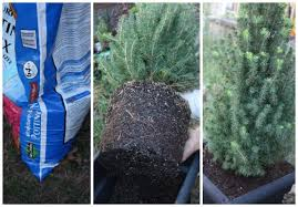 decorating a live indoor christmas tree lowescreator