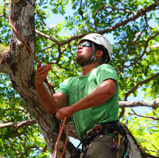 illinois tree climbing championship returns to chicago chicago
